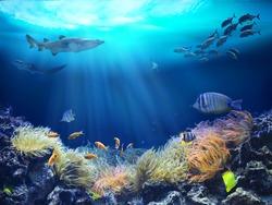 Ocean underwater with marine animals.