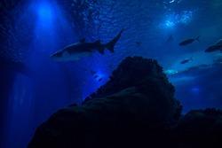 Ocean underworld in Lisbon Oceanario