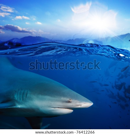 Ocean-view splitted two parts bottom is with bull-shark in blue underwater sunlight and sunset above