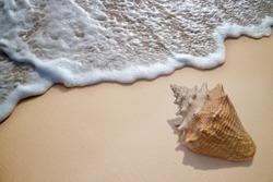 Ocean wave and shell on sandy beach