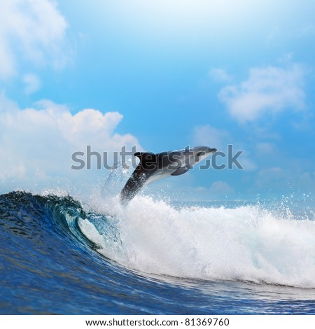 oceanview dolphin jumping from the sea through surfing wave