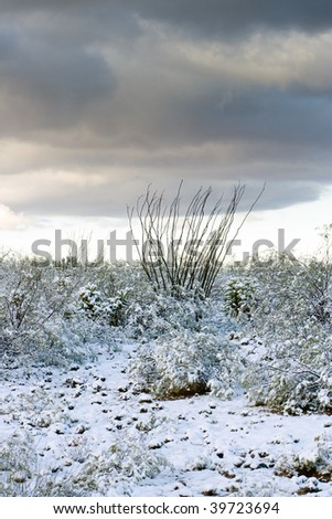 Ocotillo and cactus after snowstorm