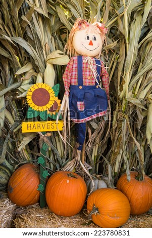 october halloween harvest pumpkins squash scarecrow and corn stalks - Halloween Corn Stalks