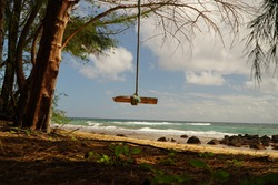 October 17, 2019 Kauai, Hawaii, USA.  A rope swing hanging from a tree branch on a deserted beach over looking the Pacific Ocean.