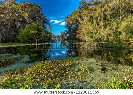 OCTOBER 14, 2018 - Lafayette, Louisiana, USA - Cajun Swamp & Lake Martin, near Breaux Bridge and Lafayette Louisiana