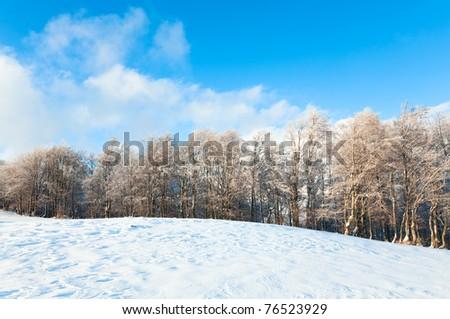 October mountain beech forest edge and first winter snow