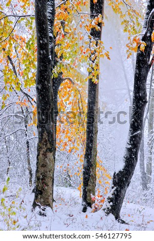 October mountain beech forest with first winter snow - Shutterstock ID 546127795