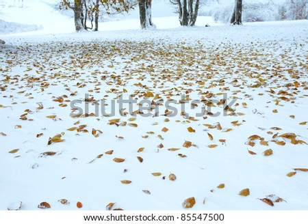 October mountain beech forest with first winter snow and last autumn leafs over - stock photo