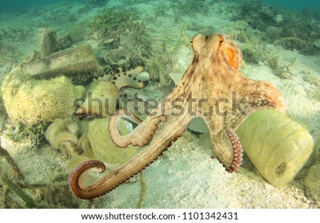Octopus and plastic pollution in ocean. Plastic bottles and bags pollute sea and contaminate seafood