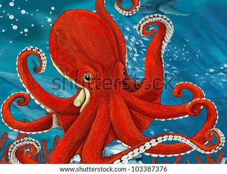octopus close up