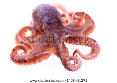 Octopus on a white background Сток-фото ©