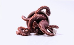 Octopus Sea Food gourmet Tentacles