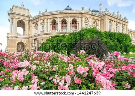 Odessa garden with pink roses with Odessa ballet and opera house in Odessa, Ukraine #1441247639