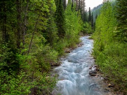 Off of service road trail 316 in Flathead National Forest an image of Canyon Creek.