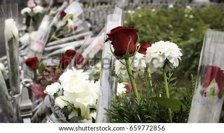Offer flowers for victims of terrorism, violence and symbol peace #659772856