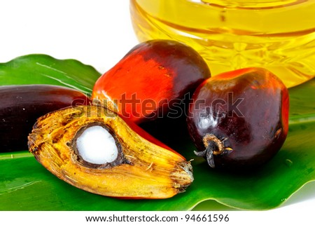 oil palm fruits and palm olein cooking oil