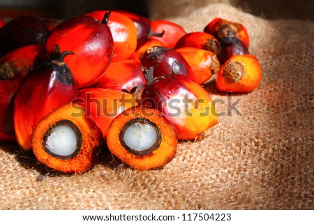 Oil Palm fruits with cut fruit