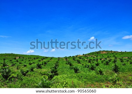 Oil palm plantation on the hill and blue sky