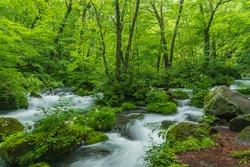 Oirase mountain stream in early summer