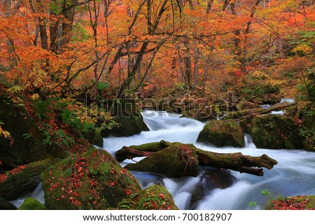 Oirase stream in autumn.