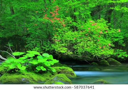 Oirase stream in summer #587037641