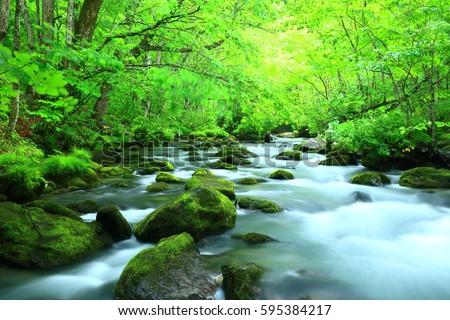 Oirase stream in summer #595384217