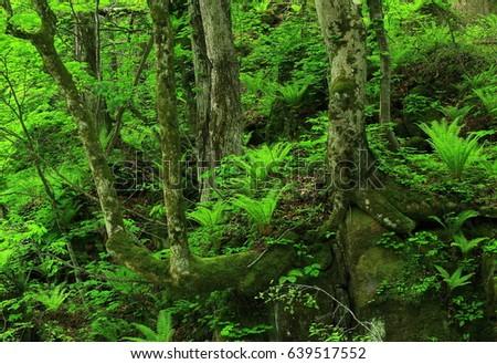 Oirase stream in summer #639517552