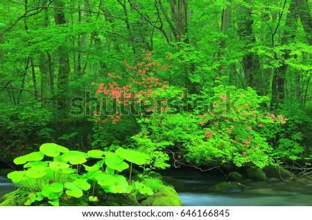 Oirase stream in summer #646166845