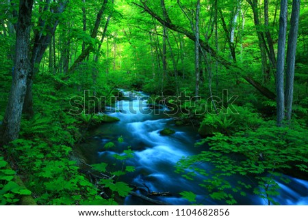 Oirase stream of fresh green. #1104682856