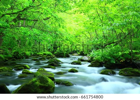 Oirase stream of fresh green. #661754800