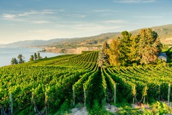 Okanagan Valley, vineyards near Penticton, British Columbia, Canada
