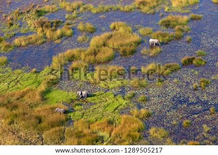 Okavango Delta aerial view, Botswana. The Okavango Delta is home to a rich array of   wildlife.