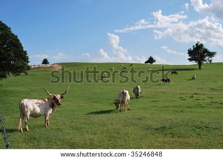 Oklahoma Longhorn Field