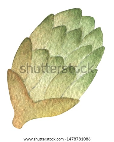 Oktoberfest green hops.. Hand drawn watercolor painting on white background clip art graphic elements for creative design and printable decor.