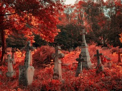 Old abandoned cemetery on a sunny autumn morning. Red leaves on the trees in the cemetery.