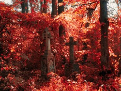 Old abandoned cemetery with crosses on a sunny autumn day. Red colors on the trees in the cemetery.