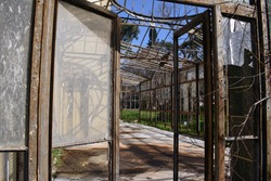 old, abandoned greenhouse with broken glasses, trees and grass
