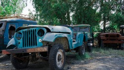 Old abondoned jeep willys trucks