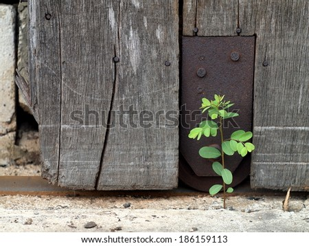 old aged weathered wood surface of a gray color old country house door with rusty roller and rail installed with rusty metal plate with a small tiny cute green plant growing on the ground