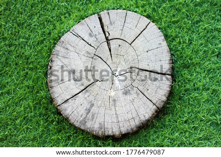 old and dry tree stump textures, surface of cross section of tree with scratches and cracks and hole.