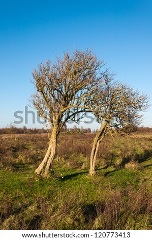Old and mossed trees in a Dutch nature reserve in fall colors. - stock photo