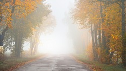 Old asphalt country road (alley) through the colorful deciduous oak, birch, maple trees with green, orange, yellow, golden leaves. Thick morning fog. Natural tunnel. Atmospheric autumn landscape