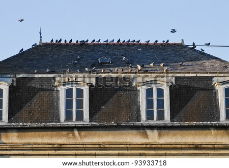 Old attic with white windows and doves sitting on the roof