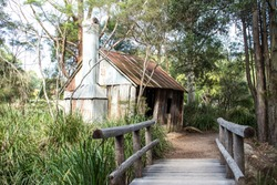 Old Australian wooden bush shack house with corrugated iron roof, wooden bridge leading to entrance surrounded by eucalyptus gum trees
