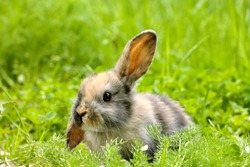 old baby pet rabbit sitting in green grass