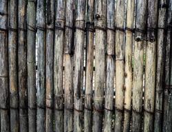 Old bamboo fence  Organic Background   woodenTexture