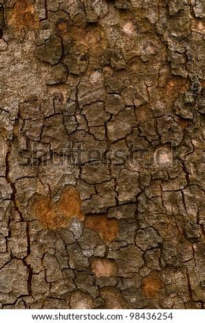 Old bark of tree texture