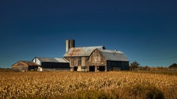 Old Barns in a Cornfield, Eastern Ontario