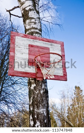 Old Basketball Hoop with wooden blackboard on the birch tree