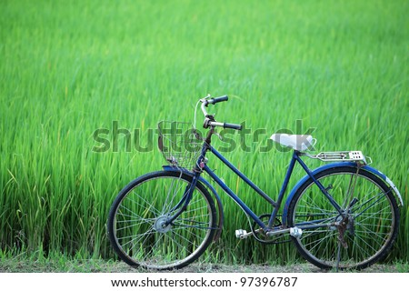 old bicycle in paddy field. - stock photo